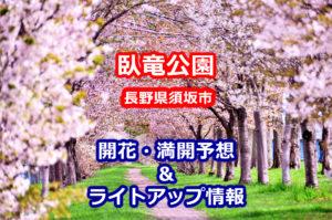 2020臥竜公園の桜開花・満開予想とライトアップ情報
