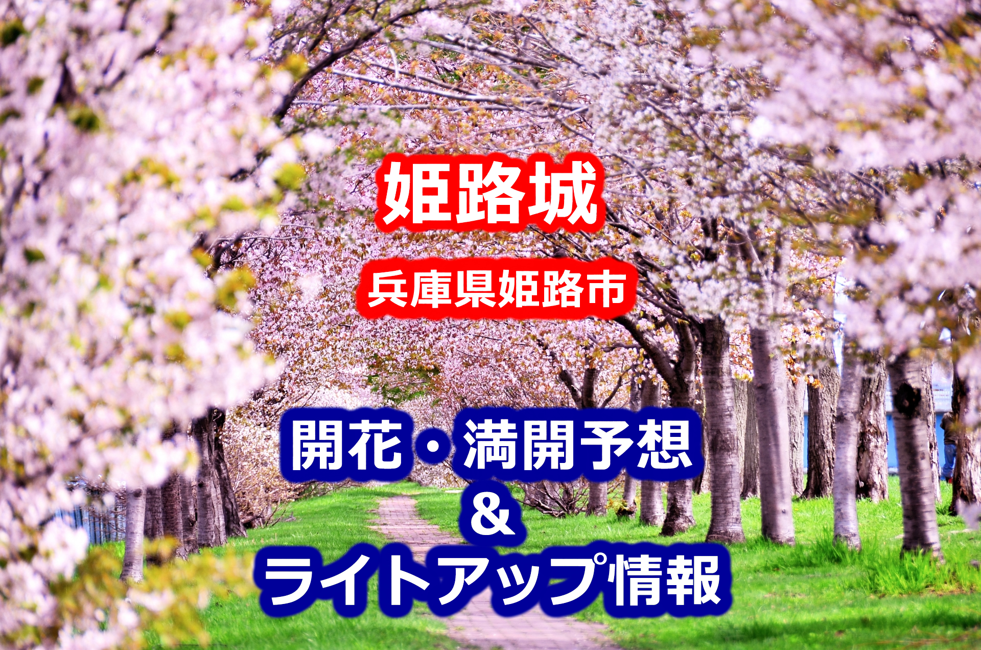 2020姫路城の桜開花・満開予想とライトアップ情報