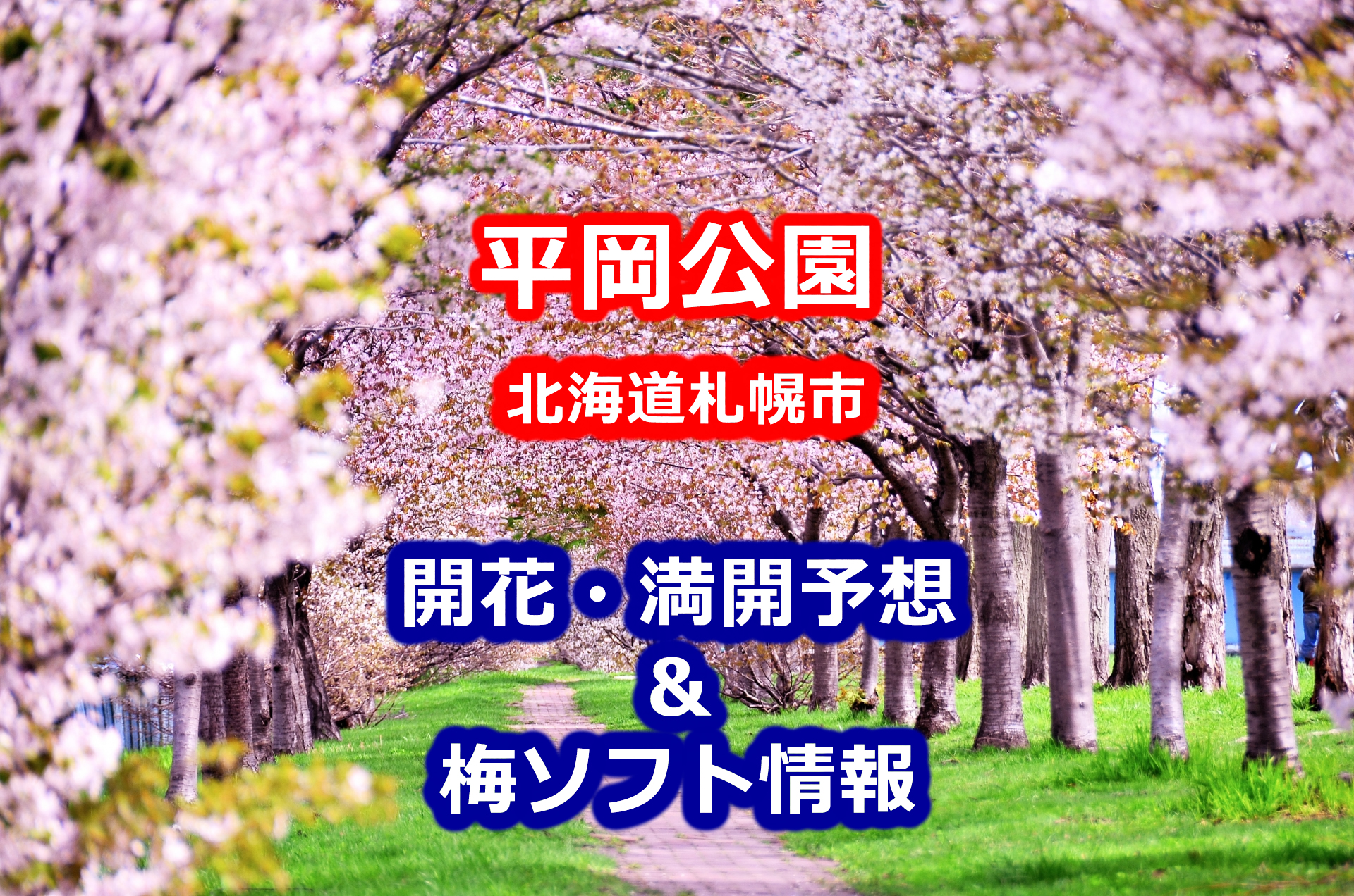 2020年平岡公園(北海道札幌市)の梅開花・満開予想と名物梅ソフトが食べられる売店情報