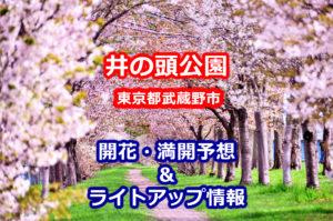 2020年井の頭公園の桜開花・満開予想とライトアップ情報