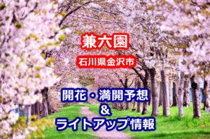 2020兼六園の桜開花・満開予想とライトアップ情報