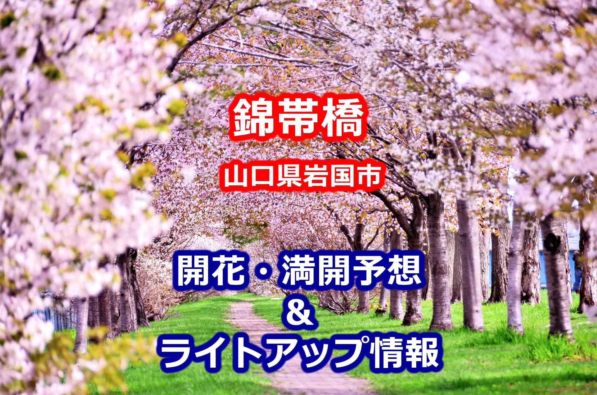 2020年錦帯橋(山口県)の桜開花・満開予想とライトアップ期間・時間
