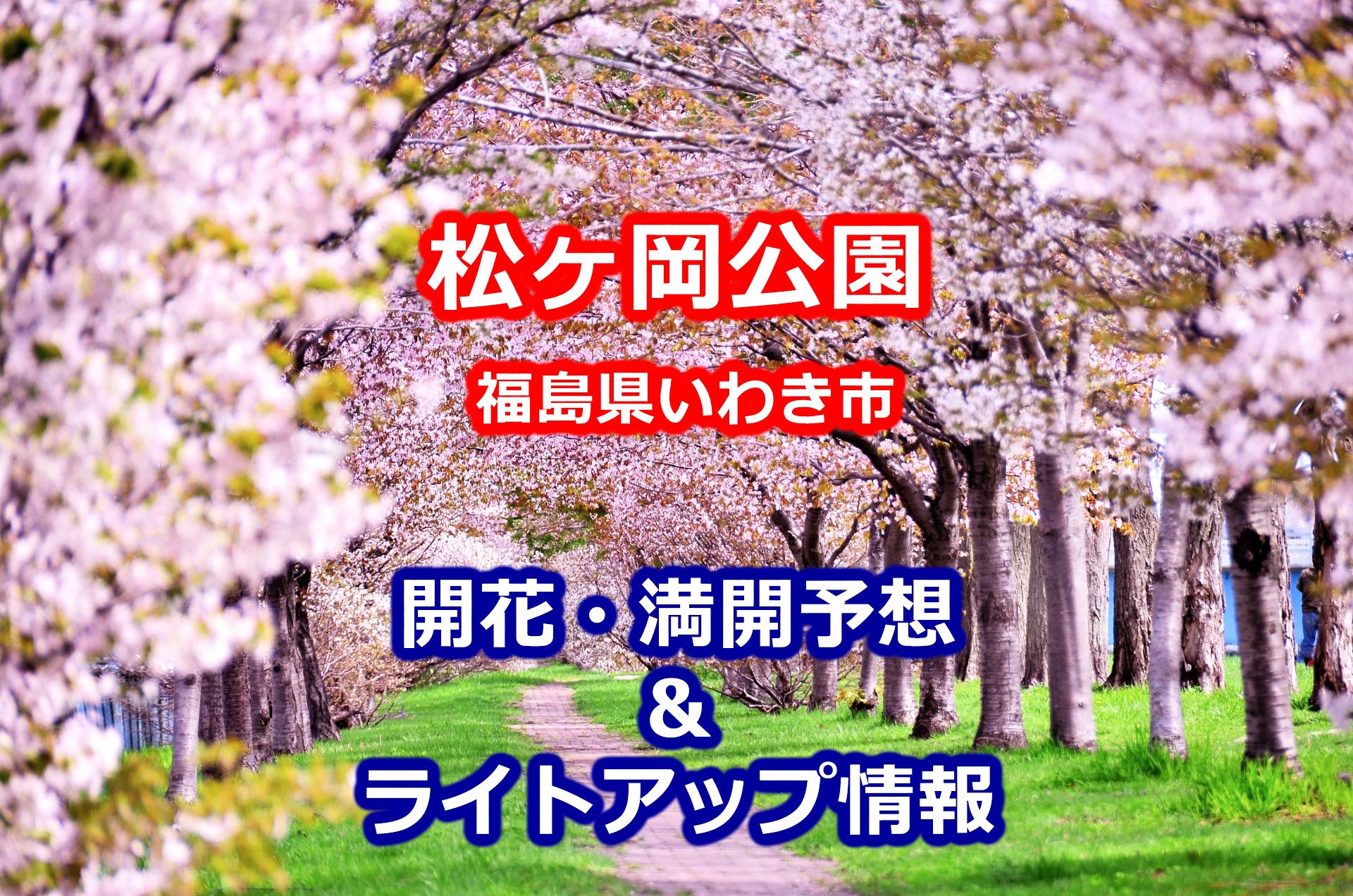 2020年松ヶ岡公園(福島県いわき市)の桜開花・満開予想とライトアップの期間・時間帯!