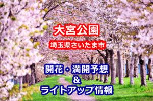 2020年大宮公園の桜開花・満開予想とライトアップ情報