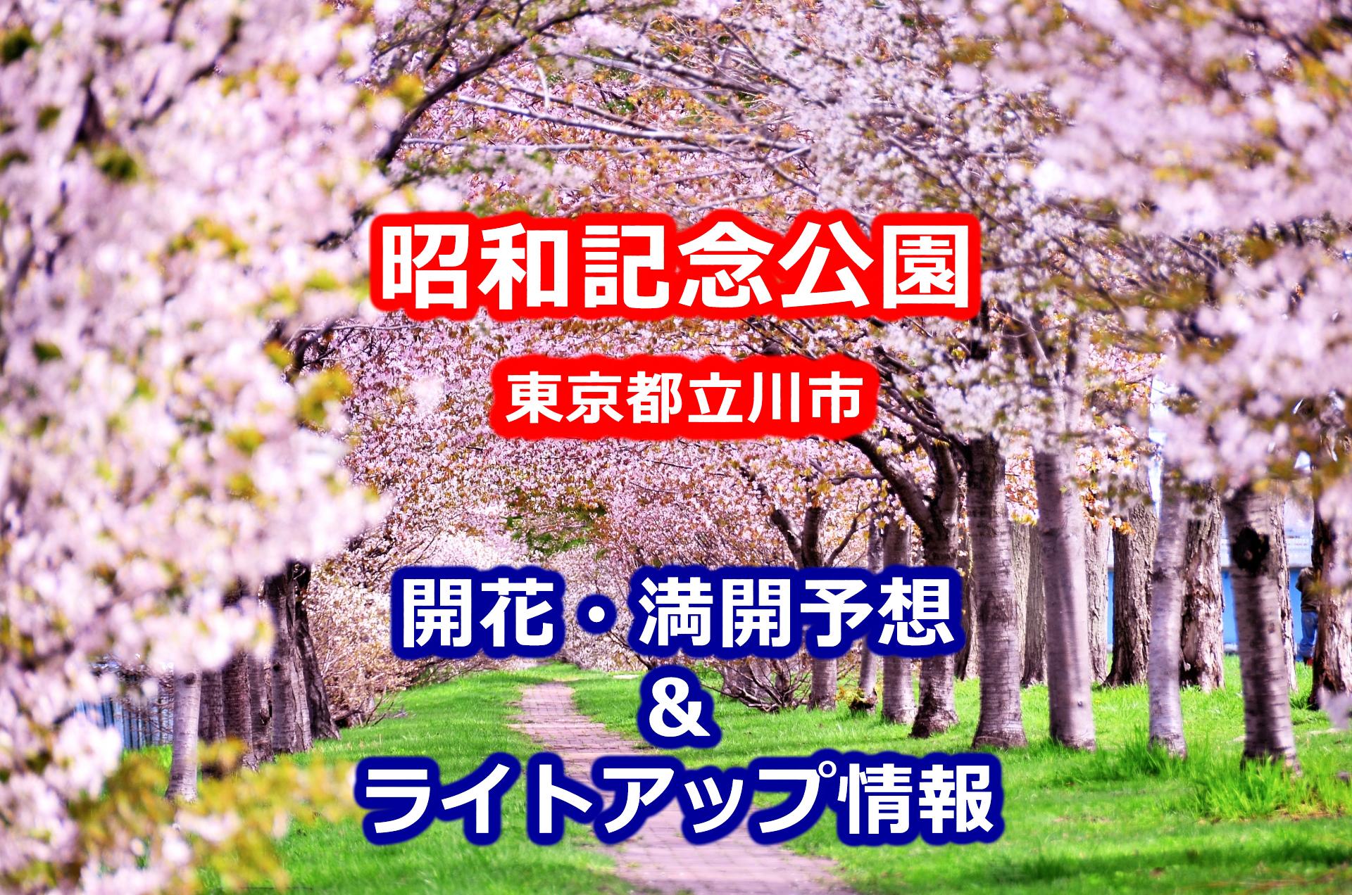 2020昭和記念公園の桜開花・満開予想とライトアップ情報