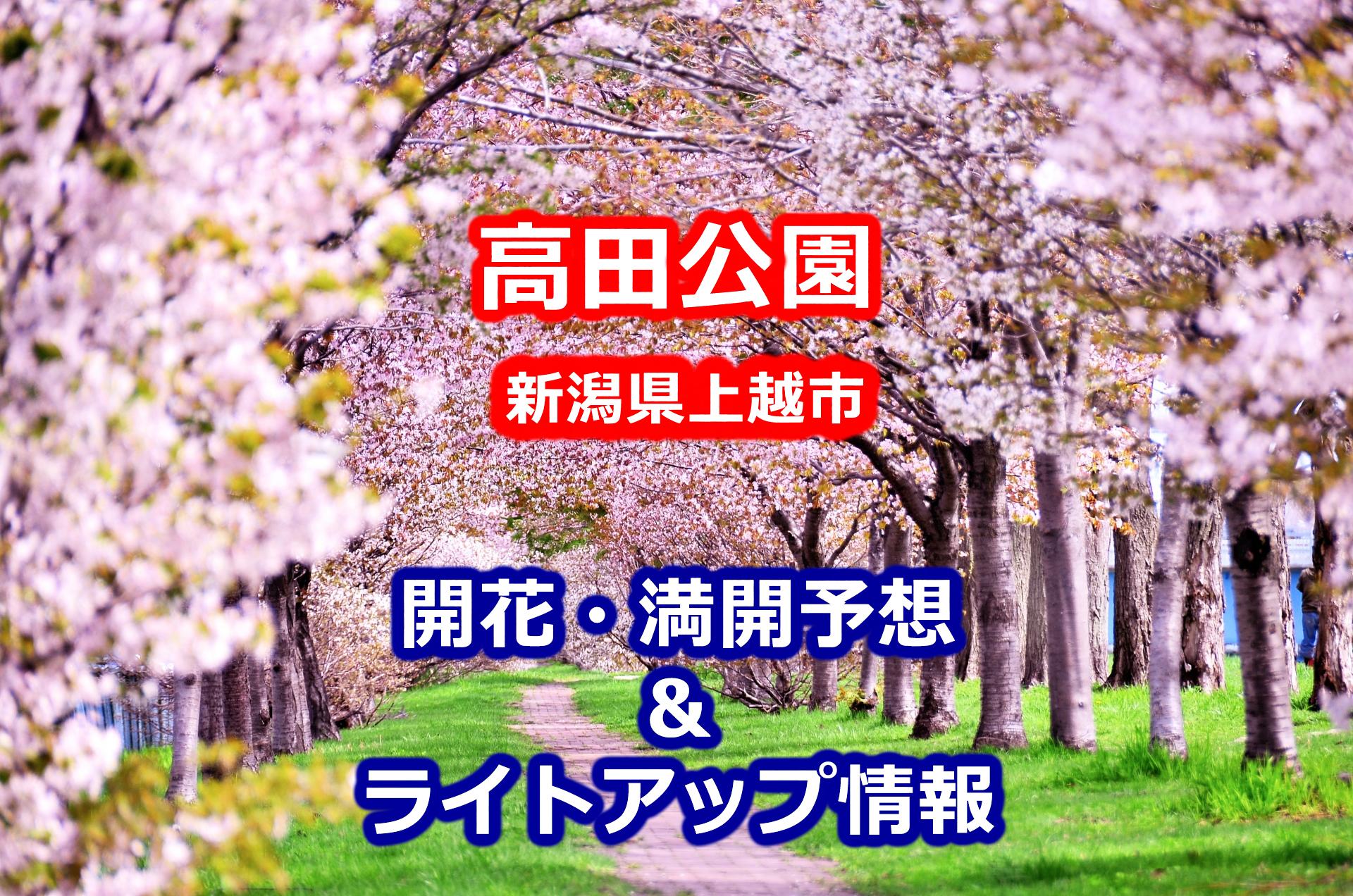2020年高田公園の桜開花・満開予想とライトアップ情報