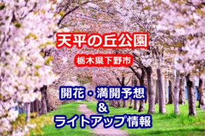 2020年天平の丘公園の桜開花・満開予想とライトアップ情報